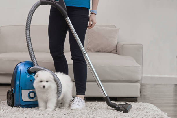 Six Most Effective Carpet Cleaning Tips for Pet Owners